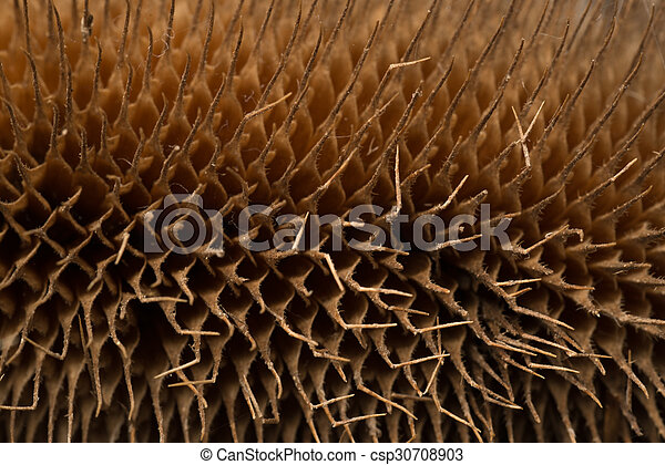 Dried up thistle close up - csp30708903