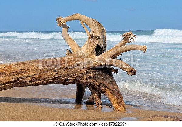 Driftwood 1 - csp17822634