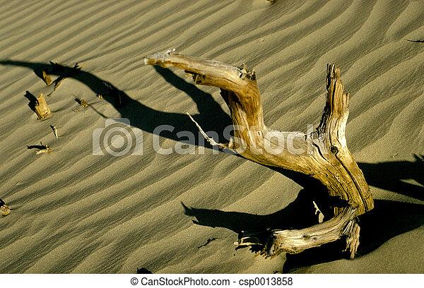 Driftwood - csp0013858