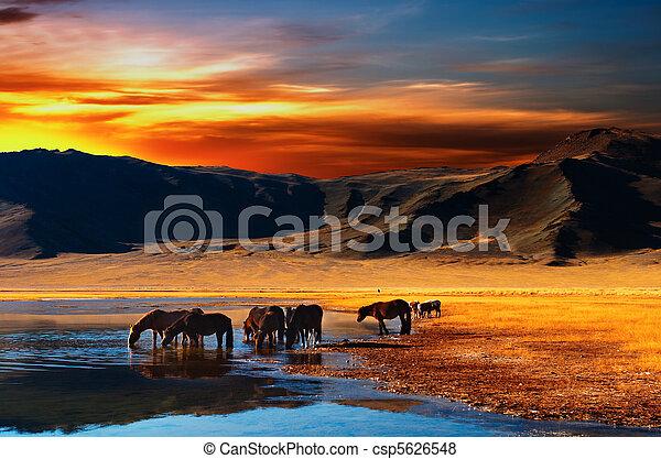 Drinking horses - csp5626548
