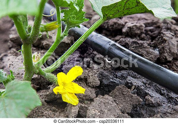 Drip irrigation system - csp20336111