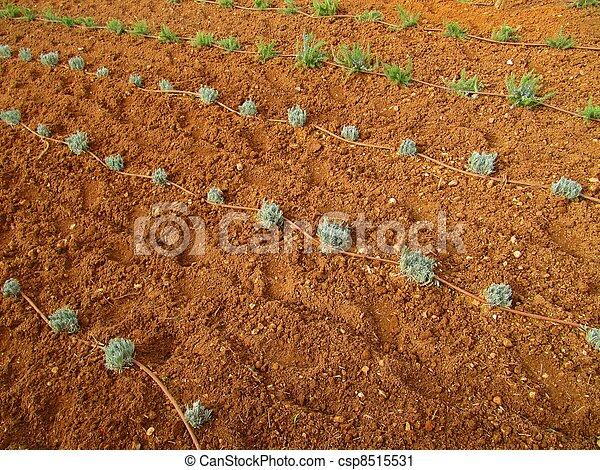 Drip irrigation system - csp8515531