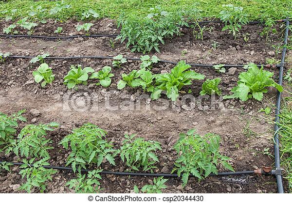 Drip irrigation system - csp20344430