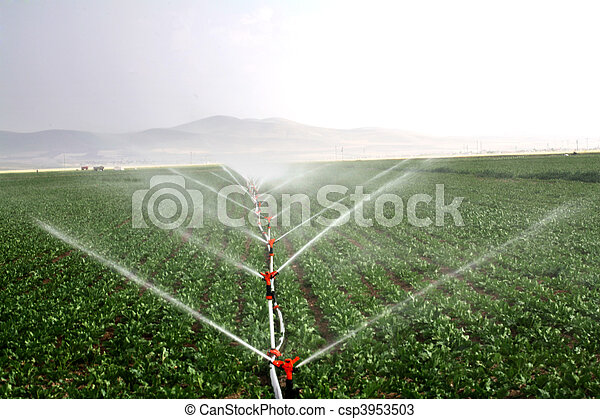 Drip irrigation systems in an agricultural field image - csp3953503