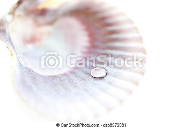 drop of dew in seashell - csp8373581