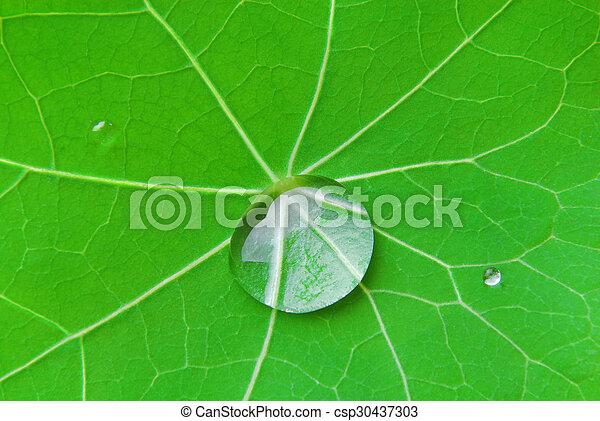 drop on the leaf - csp30437303