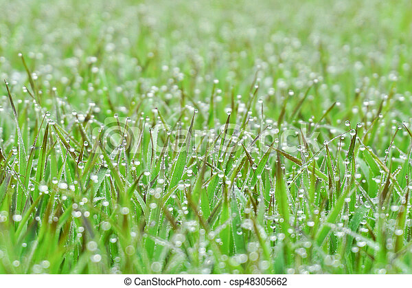 drops of dew on a green grass - csp48305662