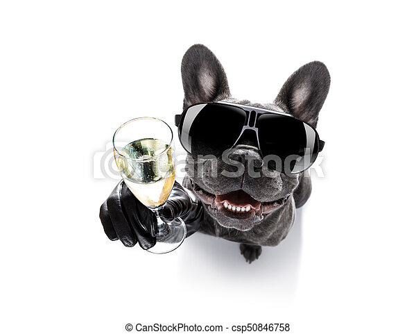 Drunk dog drinking a cocktail. Cool drunk french bulldog ...