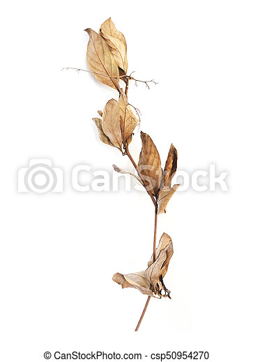 Dry branch with brown leaves in autumn - csp50954270