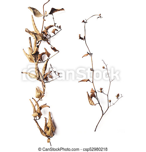 Dry branch with brown leaves in autumn - csp52980218