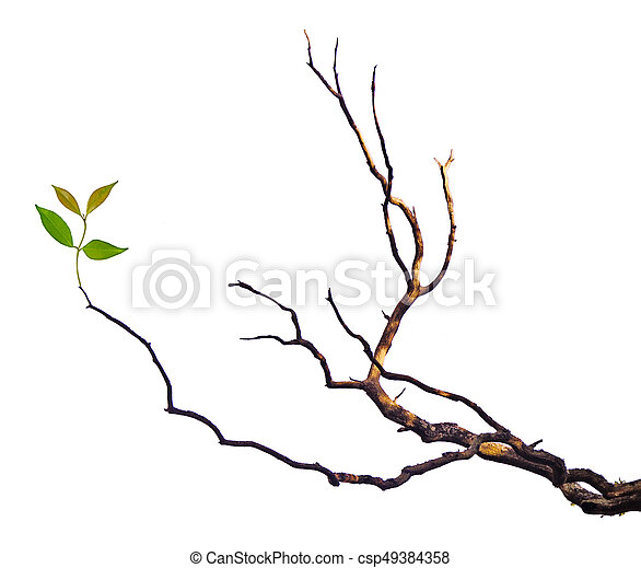 dry branch with leaf - csp49384358