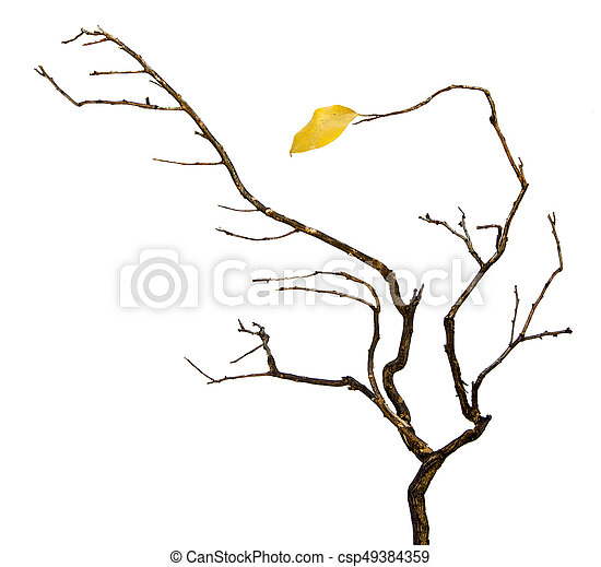 dry branch with leaf - csp49384359