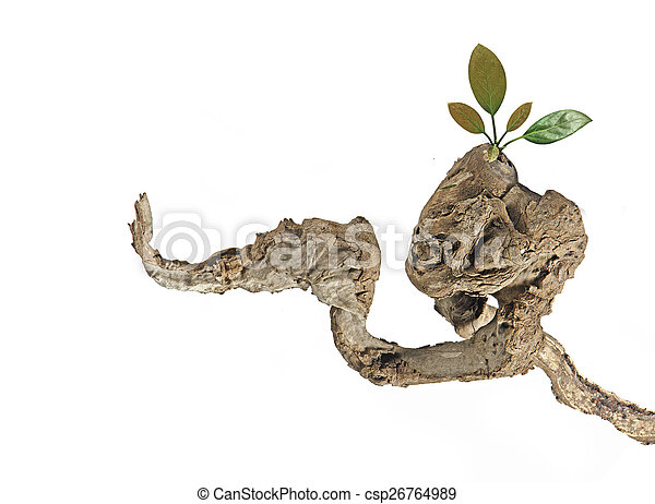 Dry branch with leaves - csp26764989