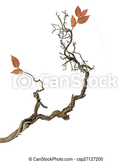 Dry branch with leaves - csp27127200