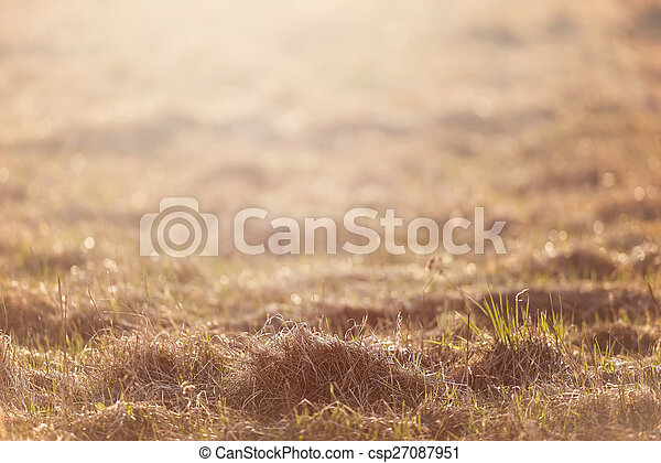 Dry grass field pasture in sunset sunlight - csp27087951