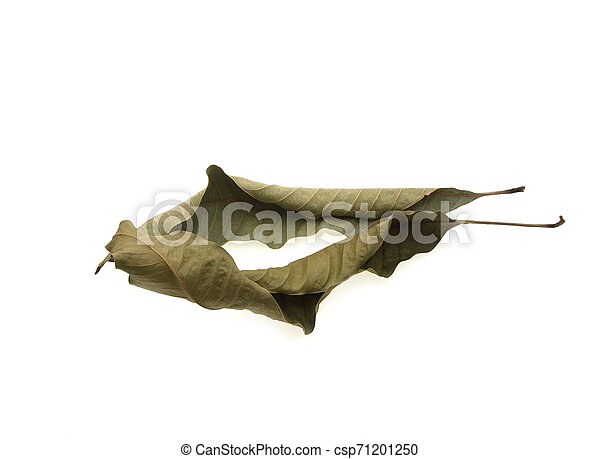 dry leaf closeup on the white background - csp71201250