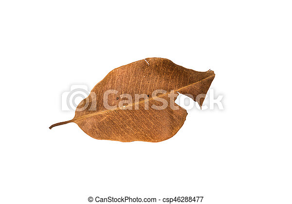 Dry leaf on the white background - csp46288477