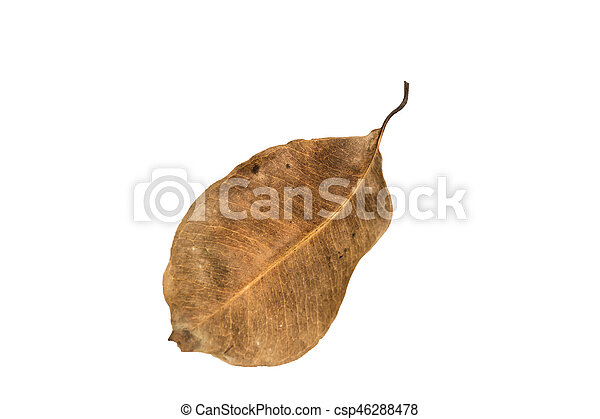 Dry leaf on the white background - csp46288478
