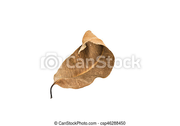 Dry leaf on the white background - csp46288450