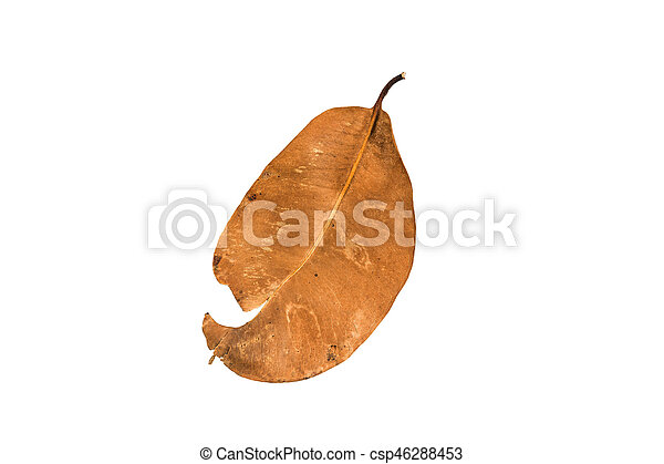 Dry leaf on the white background - csp46288453
