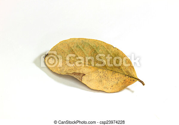 dry leaf on the white background - csp23974228