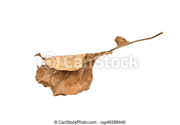 Dry leaf on the white background - csp46288440
