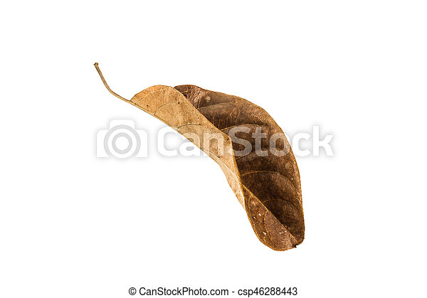 Dry leaf on the white background - csp46288443