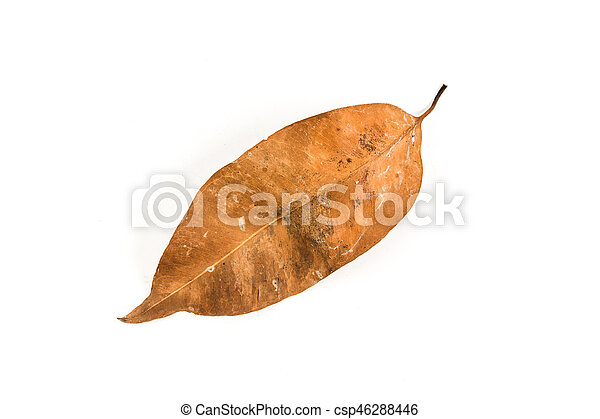 Dry leaf on the white background - csp46288446