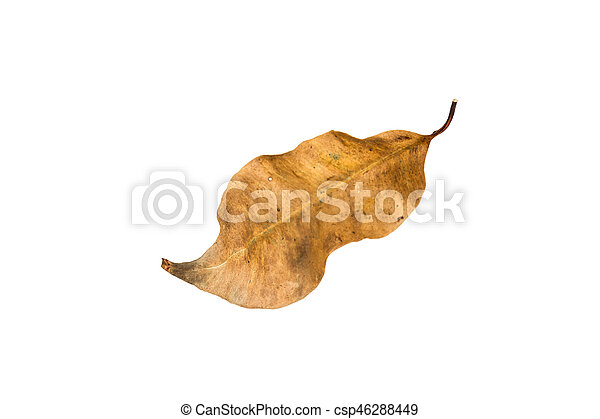 Dry leaf on the white background - csp46288449