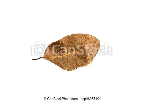 Dry leaf on the white background - csp46288491