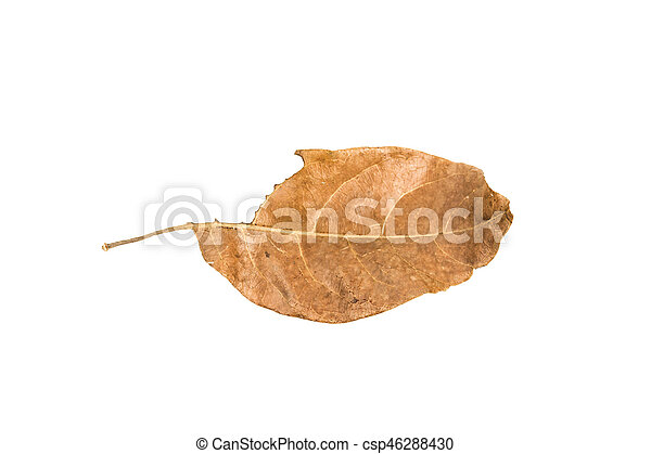 Dry leaf on the white background - csp46288430