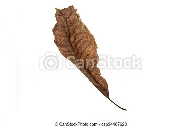 Dry leaf on white background - csp34467628