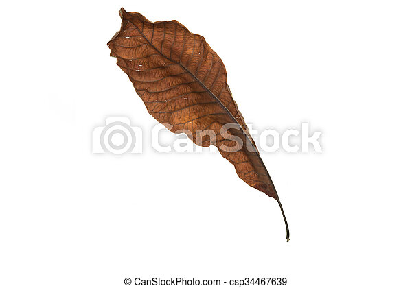 Dry leaf on white background - csp34467639