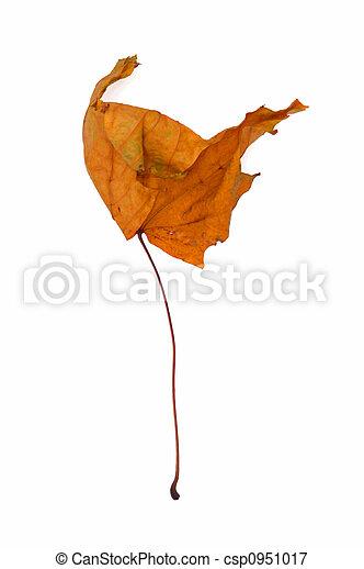 Dry leaf - csp0951017