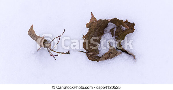 dry leaves in the snow. background. - csp54120525