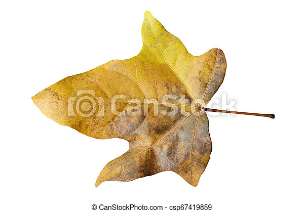 dry leaves isolated on white background - csp67419859