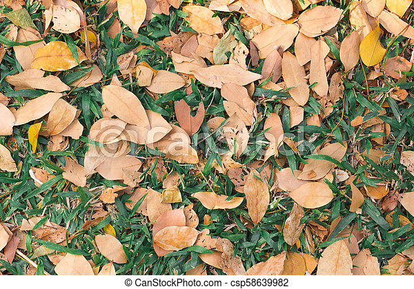dry leaves on green grass texture backgrond fall season