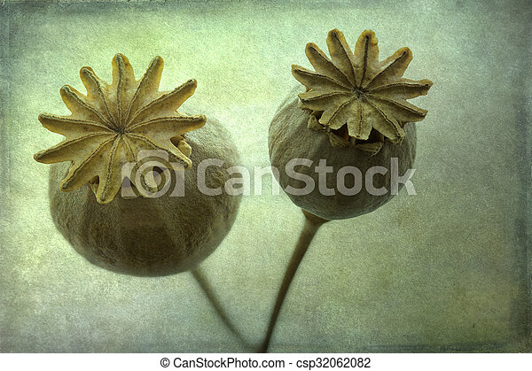 Dry poppy flowers closeup textured pictures search photographs dry poppy flowers closeup textured csp32062082 mightylinksfo Gallery