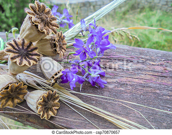dry poppy pods and purple delphinium flowers lie on a wooden board - csp70870657