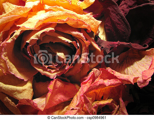 Dry Roses Background Dry Dead Roses Red Color Background Texture
