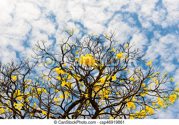 dry tree with yellow flowers - csp46919861