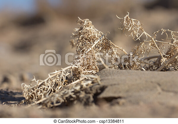 dry yellow grass in the sand - csp13384811