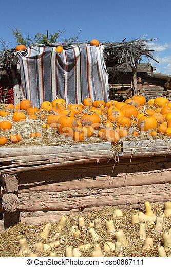 Drying Pumpkins and Butternut Squash (Cucurbita moshata) - csp0867111