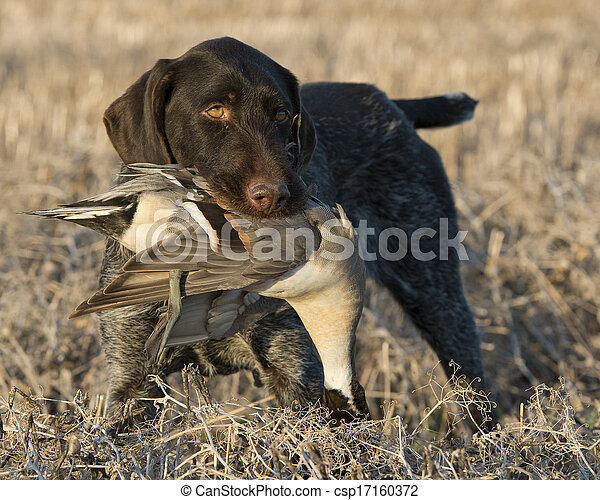 Duck Hunting - csp17160372