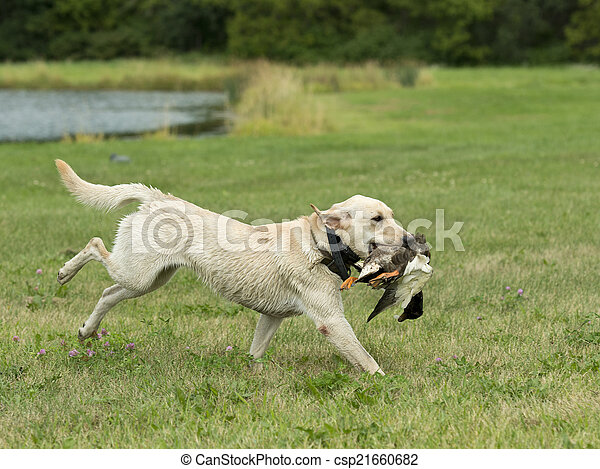Duck Hunting - csp21660682