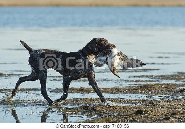 Duck Hunting - csp17160156