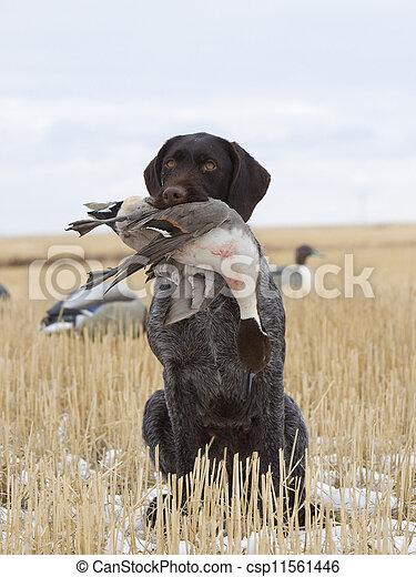 Duck Hunting - csp11561446