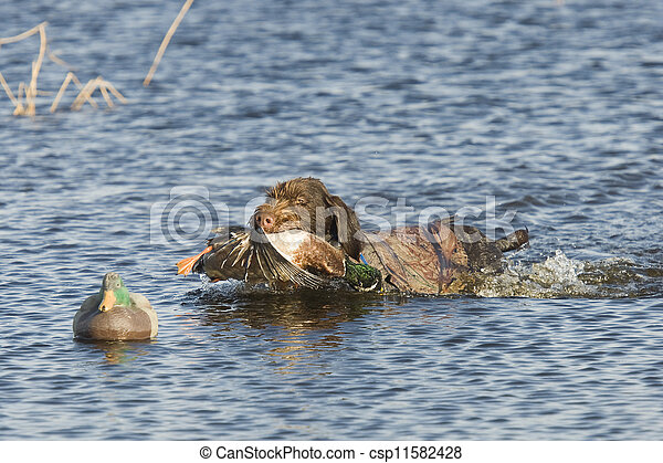 Duck Hunting - csp11582428