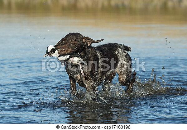Duck Hunting - csp17160196