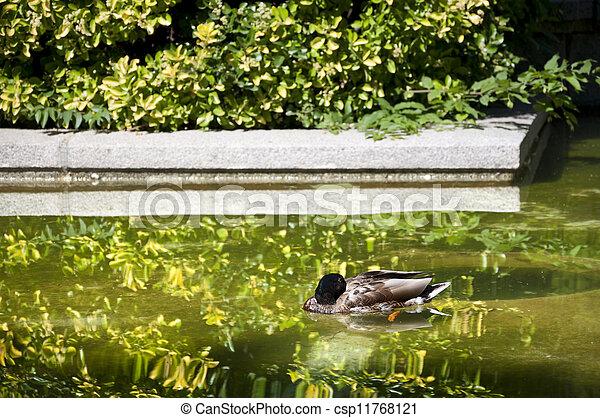 Duck sleeping - csp11768121